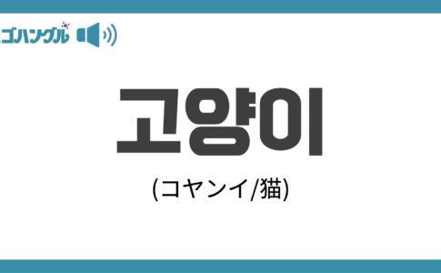 韓国語で「猫」を表す「고양이(コヤンイ)」について優しく解説