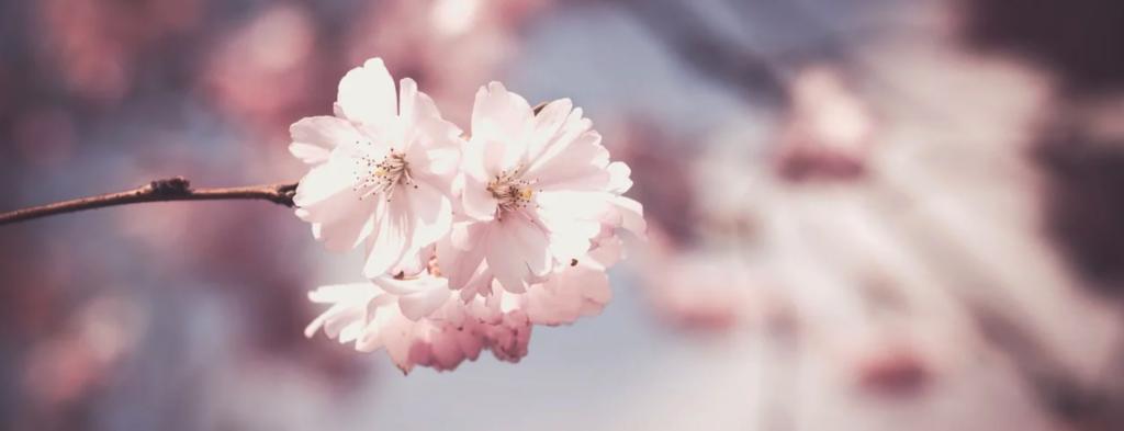 「꽃(コッ)」を用いた例文